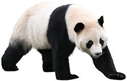 ジャイアントパンダに会える動物...